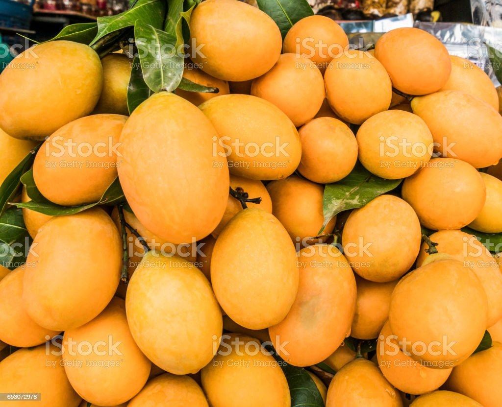 marian plum stock photo