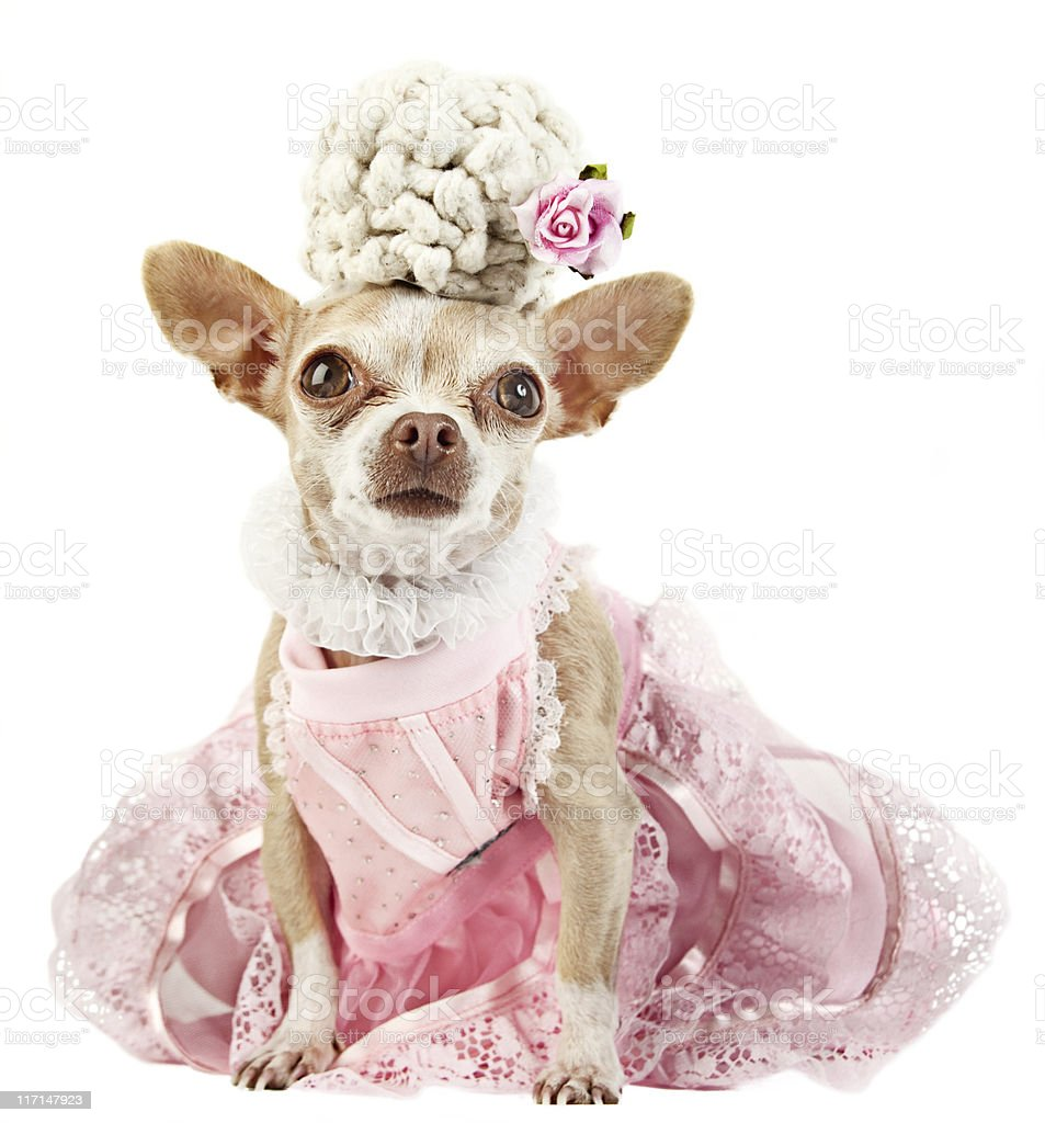 Marie Antoinette royalty-free stock photo