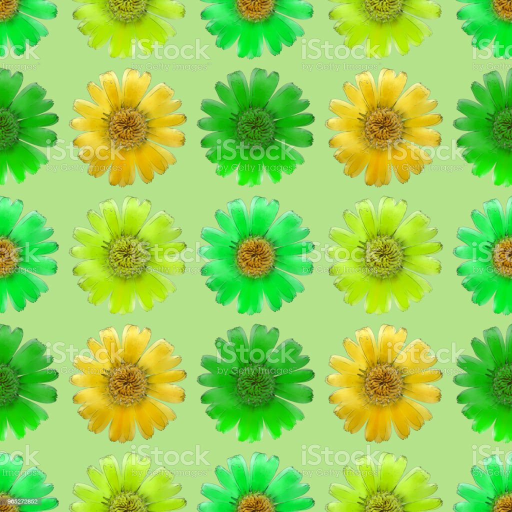 Marigold, calendula. Seamless pattern texture of flowers. Floral background, photo collage royalty-free stock photo