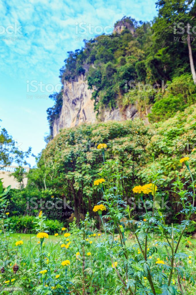 A marigold flower in the meadow with the rock mountian background. stock photo