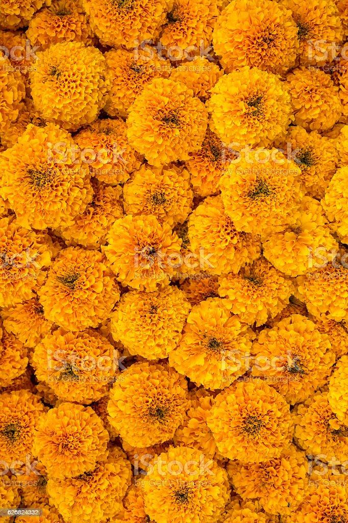 Sfondo fiori di calendula Ghirlanda - foto stock
