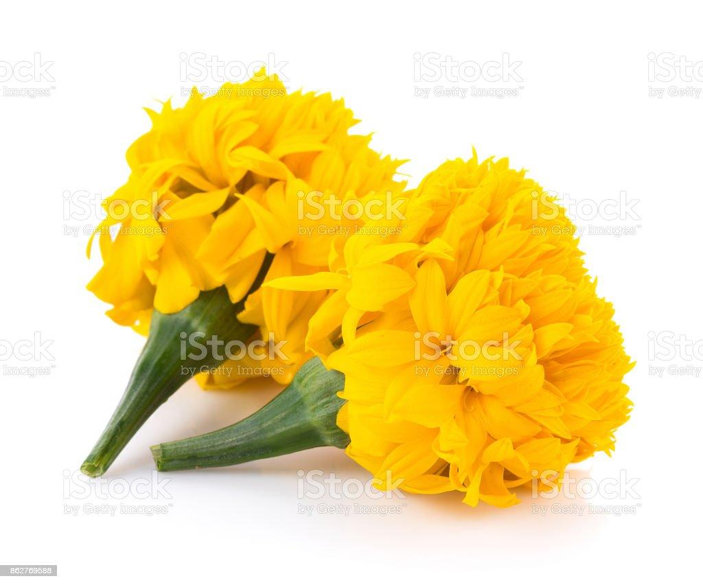 Marigold flowers on white background stock photo more pictures of marigold flowers on white background royalty free stock photo mightylinksfo
