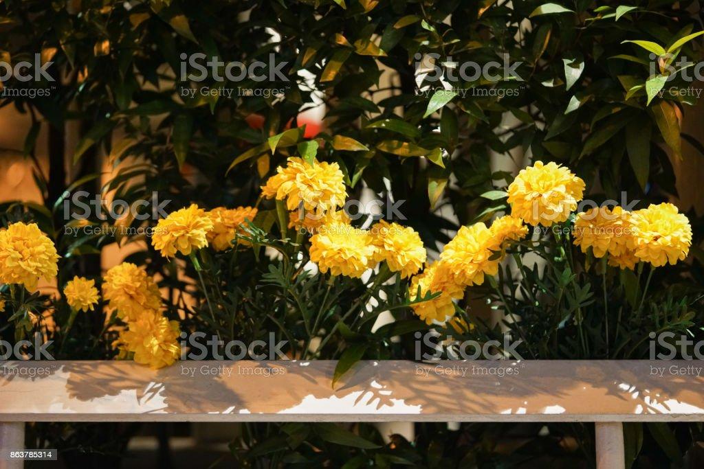 Marigold flowers plastic fence. stock photo
