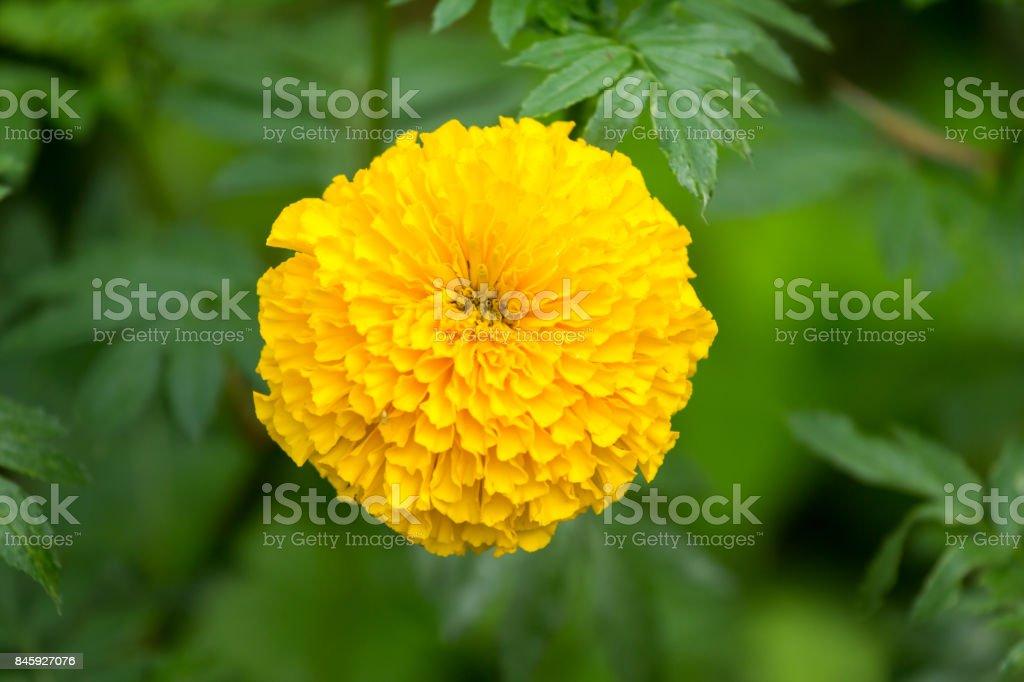 Ringelblumen-Blume auf Baum – Foto