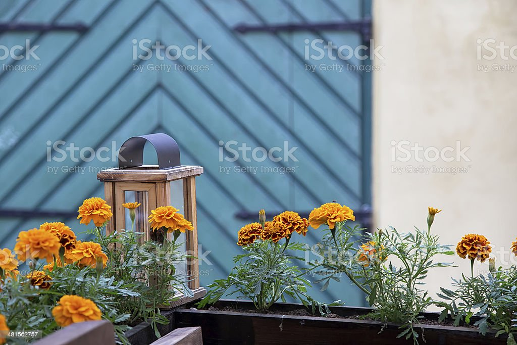 Marigolds growing in planter box stock photo