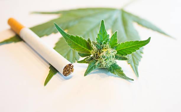 Marijuana and Cigarette stock photo
