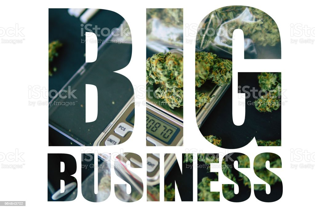 Marijuana, Big Business, White Background. Pine cone flower marijuana cannabis in the hands of a man weed top view royalty-free stock photo