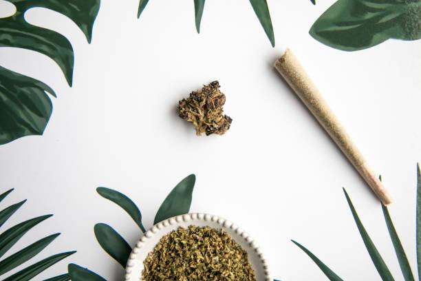 Marijuana Bud and Slanted Joint Sit on Tropical Foliage Background - Minimalist Cannabis stock photo