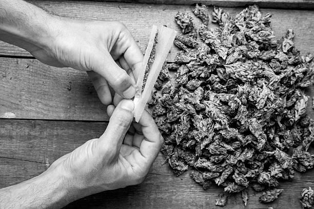 Marijuana buds and hande meking joint stock photo