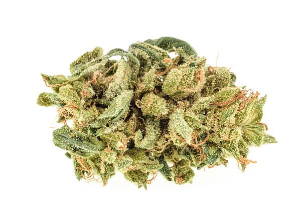 marihuana pąki odizolowane na białe tło - pączek etap rozwoju rośliny zdjęcia i obrazy z banku zdjęć