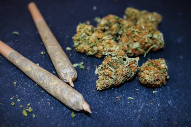 Marijuana Buds Marijuana buds with packed wood pipe for smoking the alternative herbal medicine. marijuana joint stock pictures, royalty-free photos & images