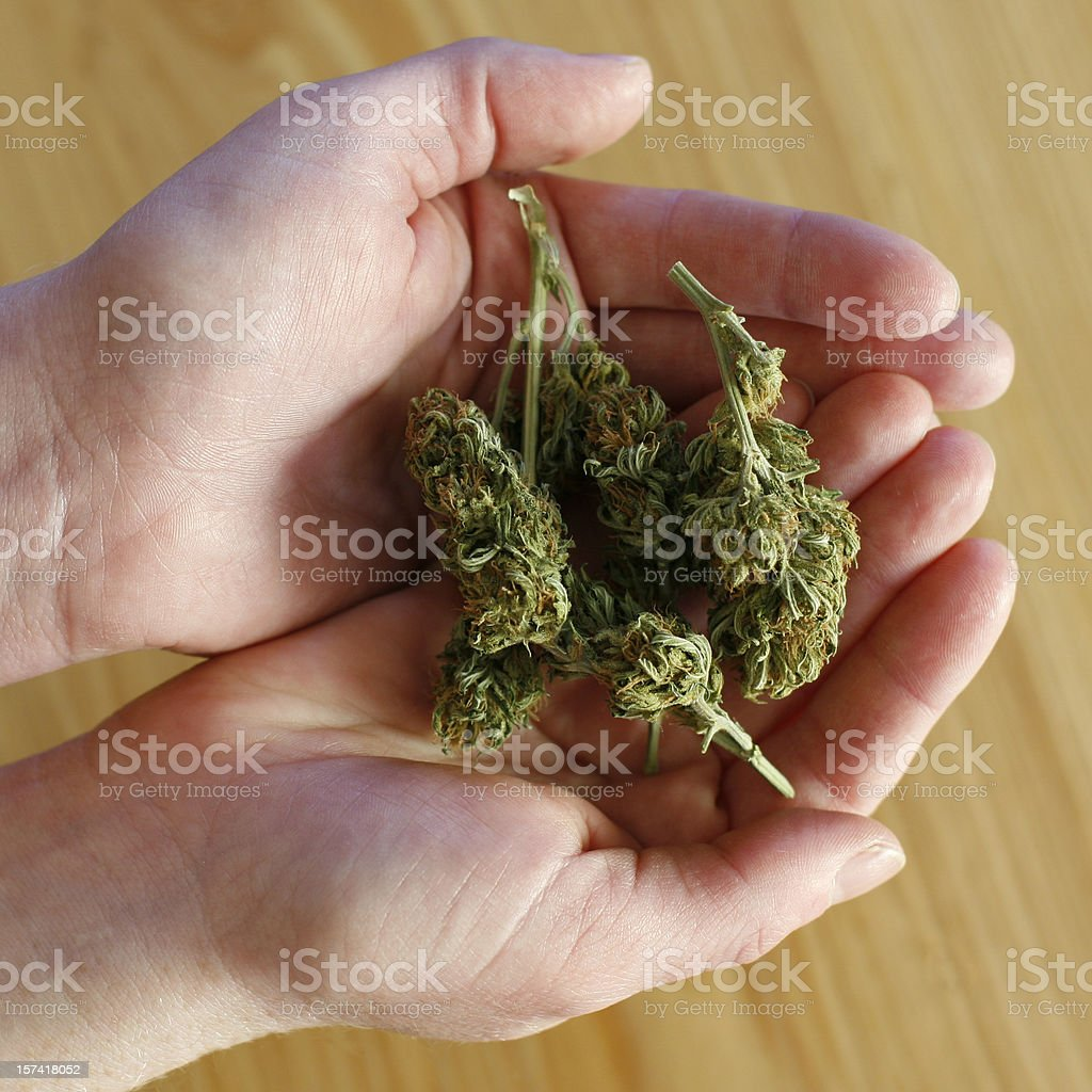 Marijuana Buds royalty-free stock photo