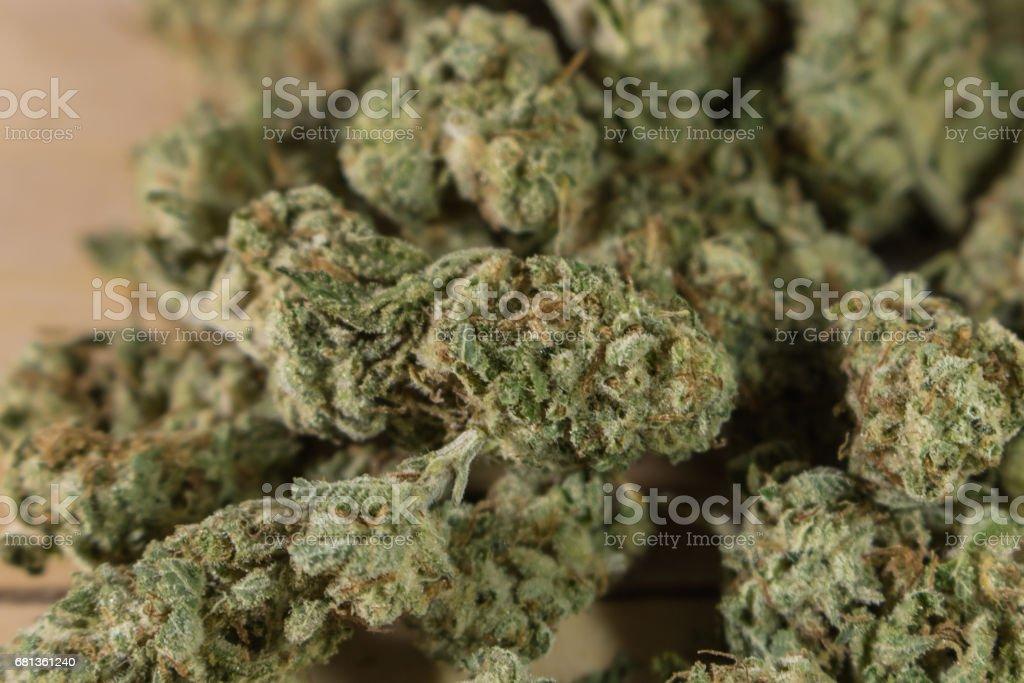 Marijuana Buds stock photo