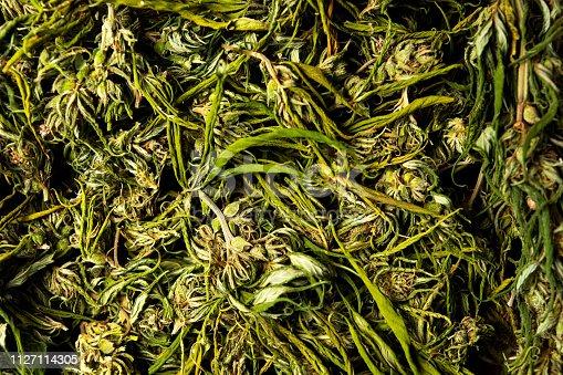 936410150 istock photo Marijuana cannabis hemp in blossom on a pile 1127114305