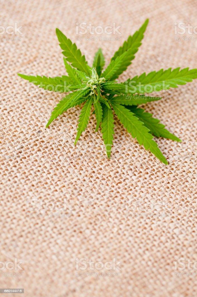 Marijuana - Cannabis - Medicinal stock photo