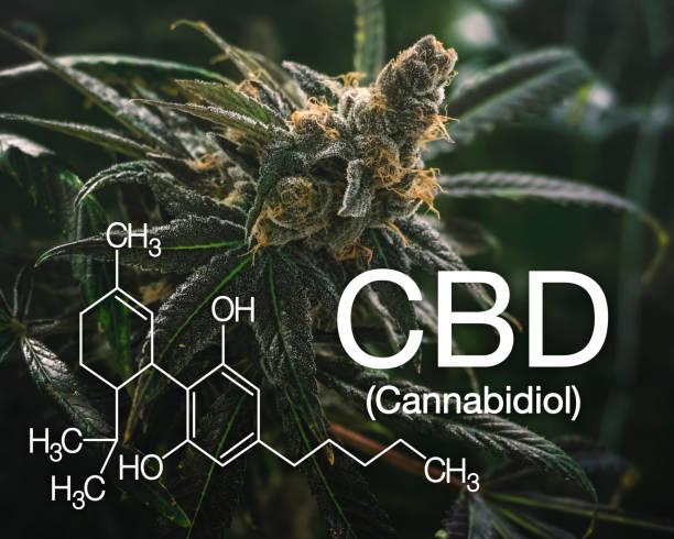 Marijuana CBD Graphic with Scientific Logo for Health Oil stock photo