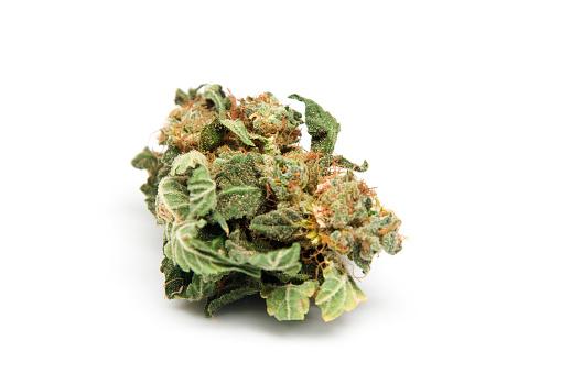 Macro of high-grade marijuana bud from Holland.