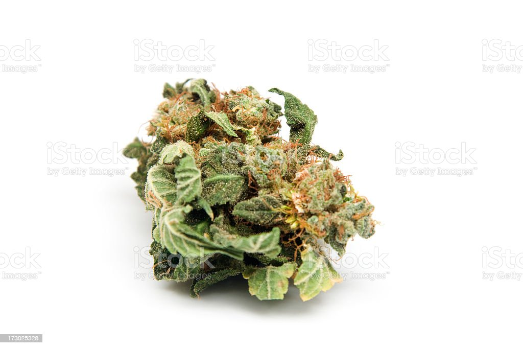 Marijuana from Holland stock photo
