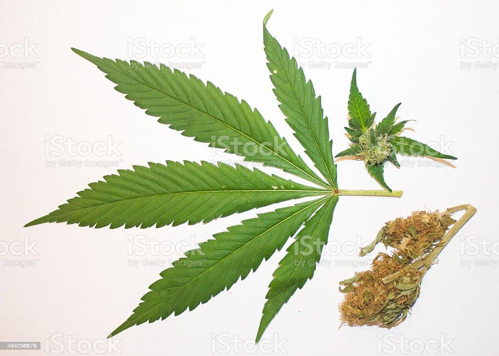 Marijuana Leaf, Bud, and Dried stock photo