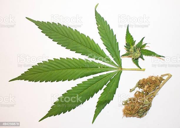 Marijuana Leaf Bud And Dried Stock Photo - Download Image Now