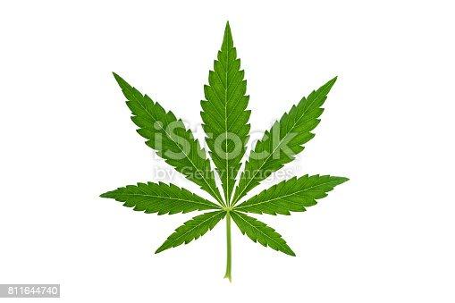 Fresh green marijuana leaf isolated on white background