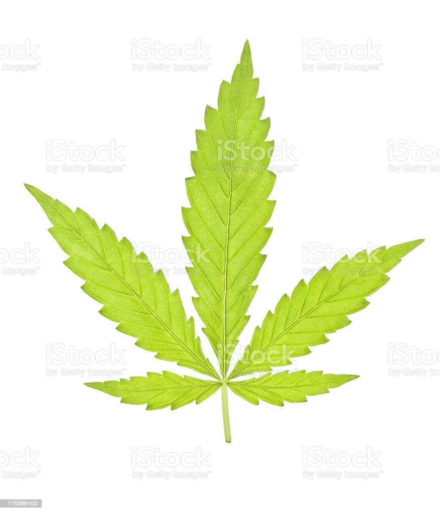 Marijuana leaf royalty-free stock photo