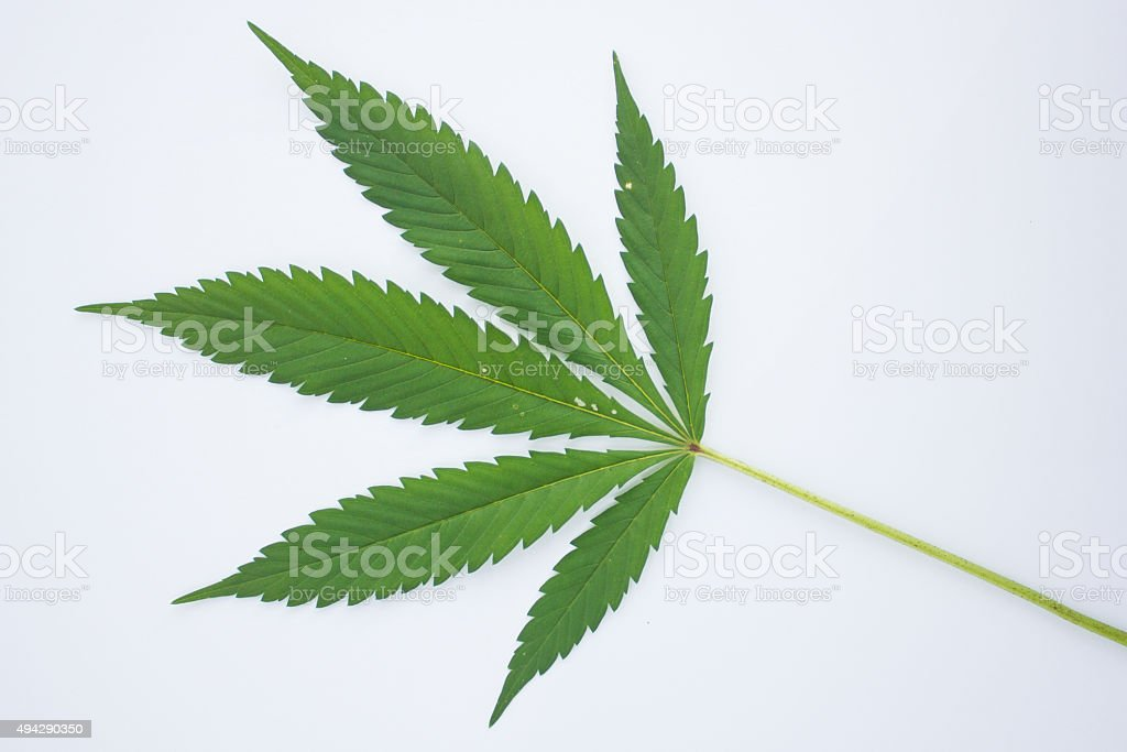 Marijuana Leaf - Royalty-free 2015 Stock Photo