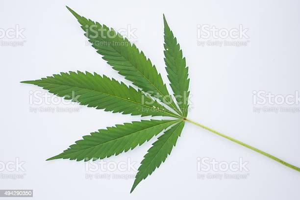 Marijuana Leaf Stock Photo - Download Image Now