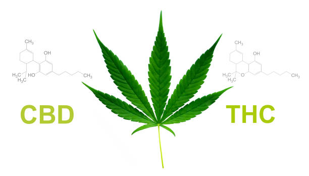 marijuana leaf with cbd thc chemical structure marijuana leaf with cbd thc chemical structure thc stock pictures, royalty-free photos & images