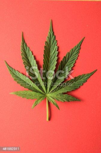 istock Marijuana 481552311