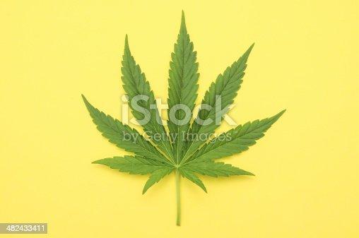 istock Marijuana 482433411