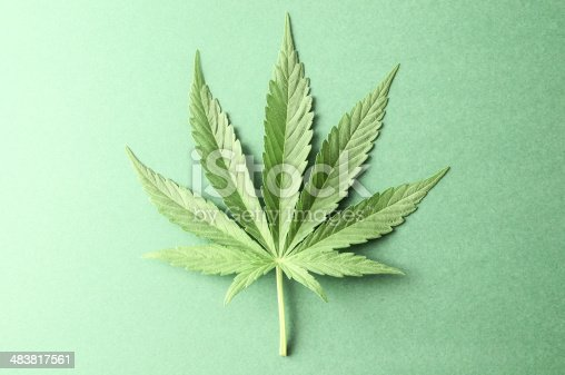 Green Fresh Marijuana Leaf with Seven Tips