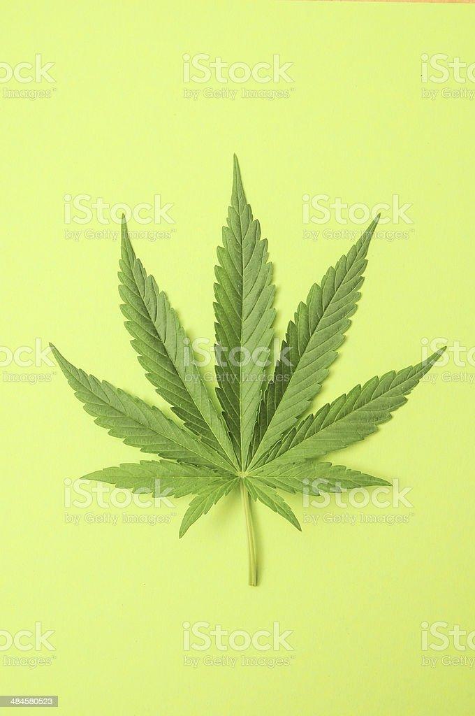 Marijuana Green Fresh Marijuana Leaf with Seven Tips Abstract Stock Photo