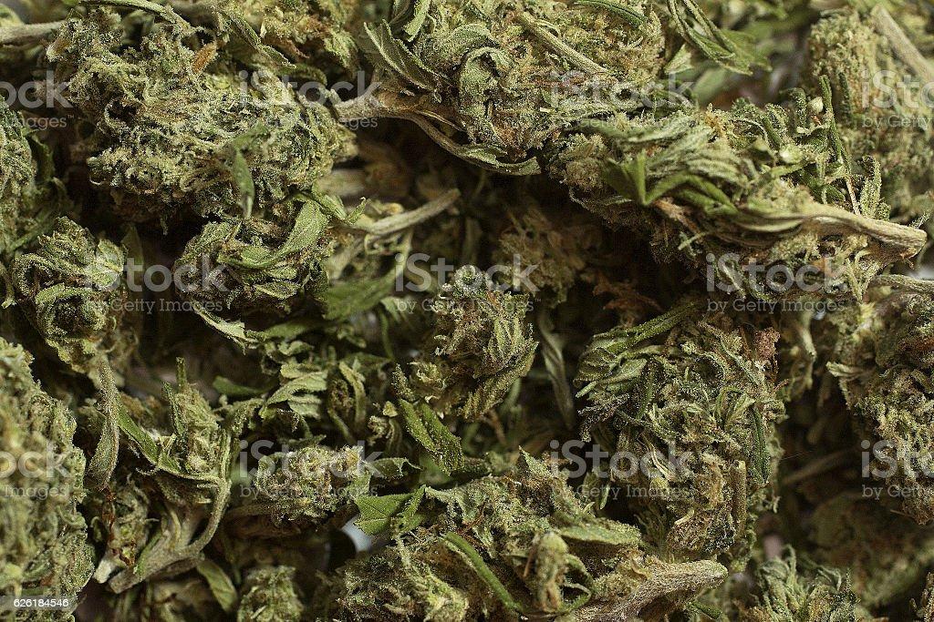Marijuana (selected focus) stock photo
