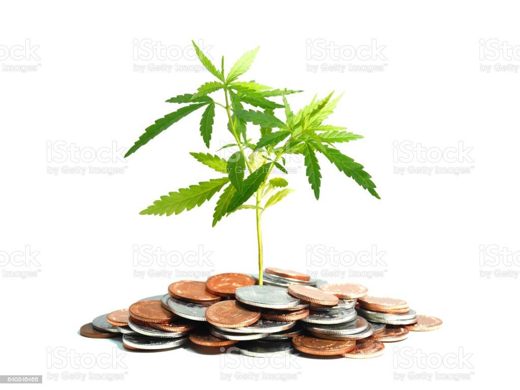 Marijuana plant growing in piles of coins stock photo
