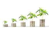 istock Marijuana plants growing on stacks of coins 969385086