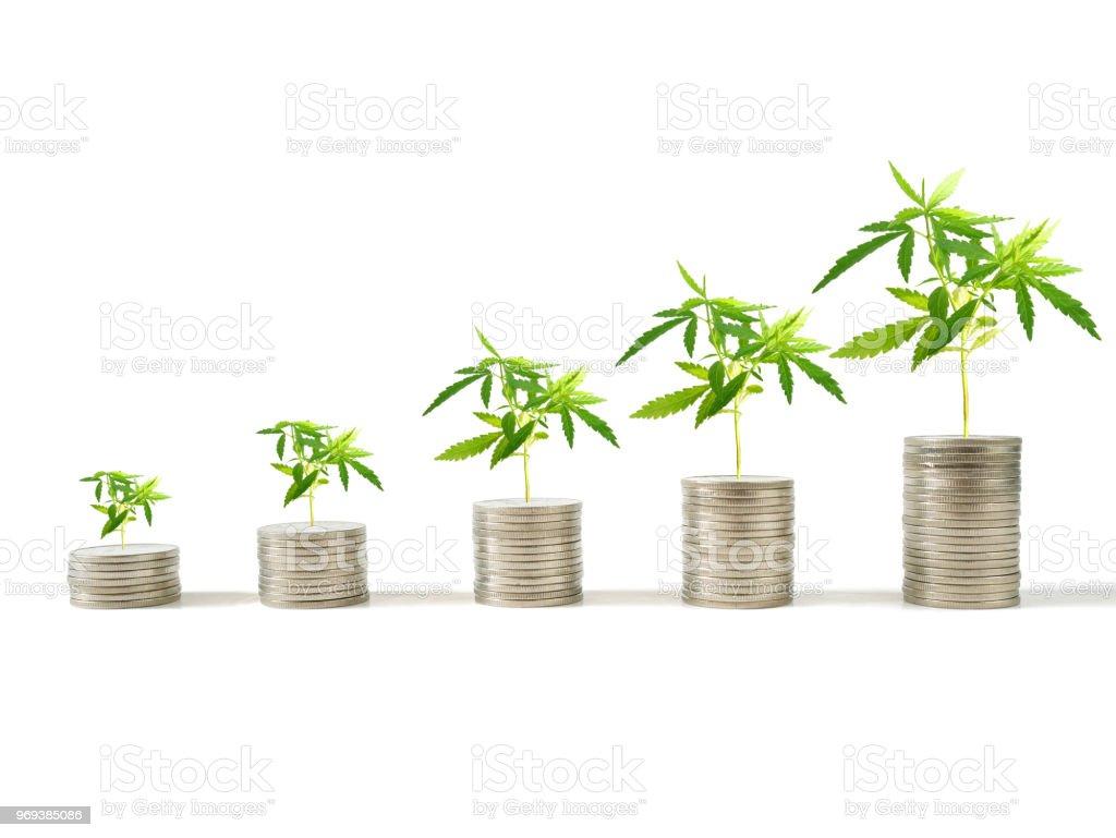 Marijuana plants growing on stacks of coins stock photo