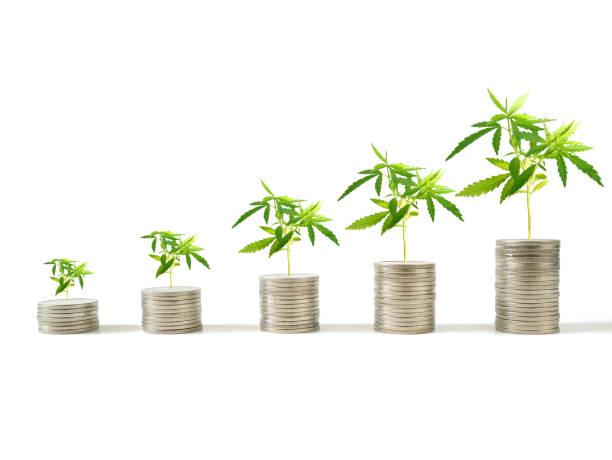 동전 더미에 성장 하는 마리화나 식물 - 재배 식물 뉴스 사진 이미지