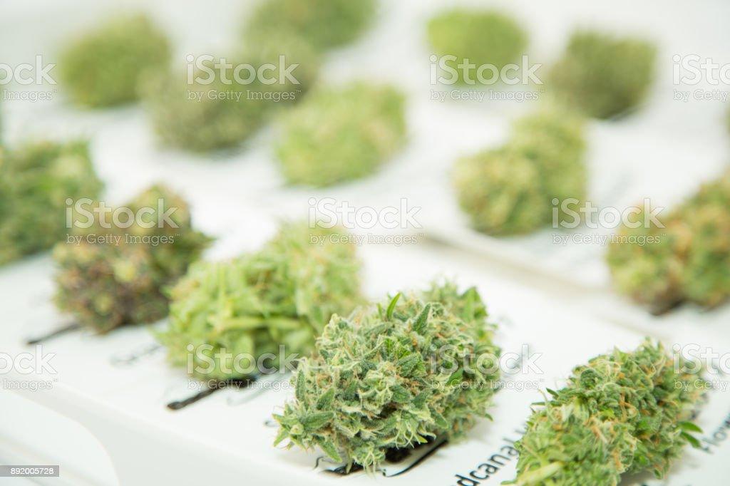 Marijuana Single Bud on White stock photo