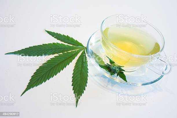 Marijuana Tea Stock Photo - Download Image Now