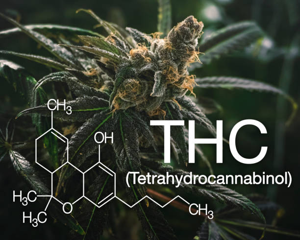Marijuana THC Graphic with Scientific Logo for Recreational Use Mental stress relief image for cannabis PTSD natural treatment thc stock pictures, royalty-free photos & images