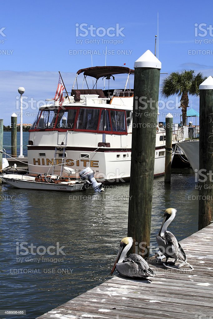 Marina view with boats and pelicans stock photo