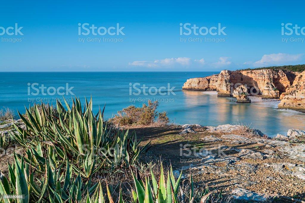 Marine aloe cactus on a background of a sea landscape. stock photo