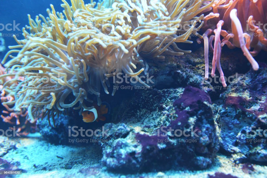 marine aquarium - Royalty-free Animal Wildlife Stock Photo