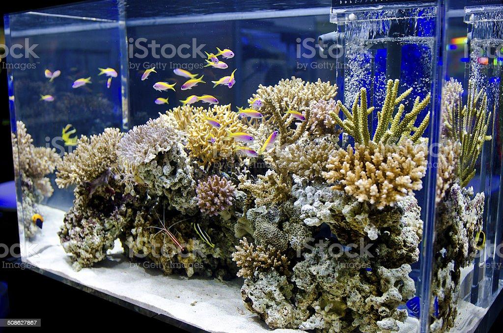 Marine Aquarium Tanks stock photo