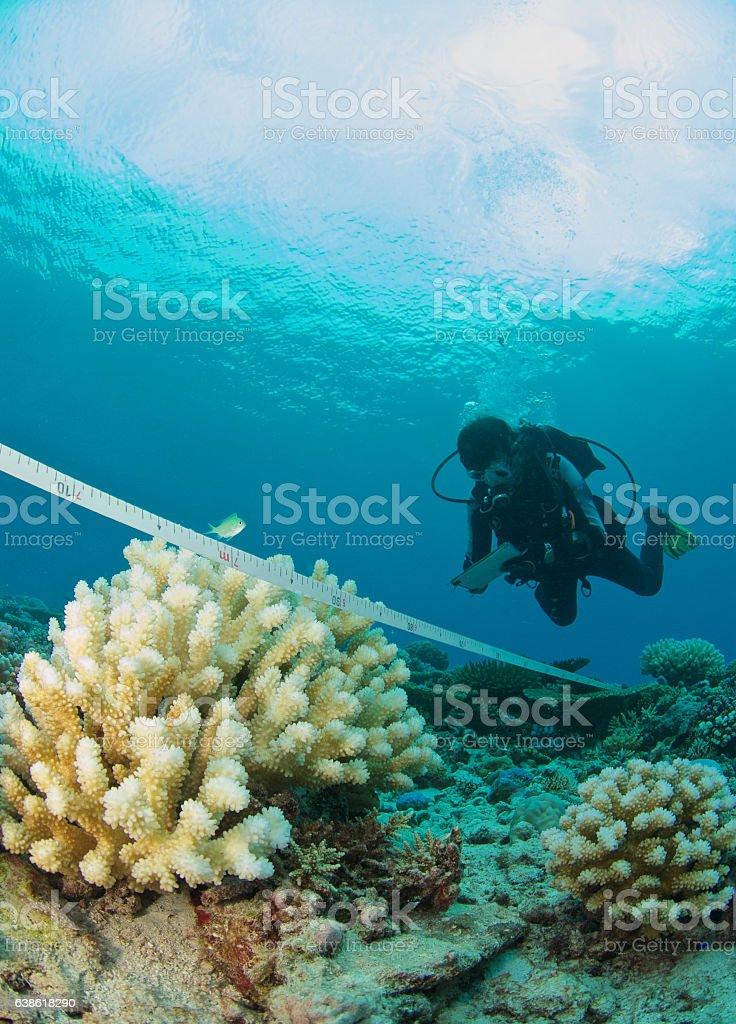 marine biologist at work - Photo