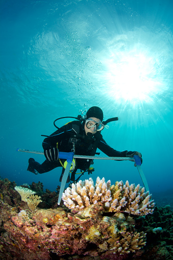 what types of marine biologists are there