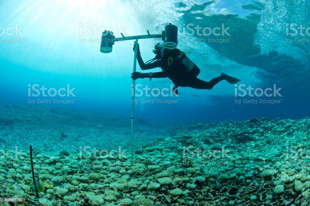 biologiste marin - Photo