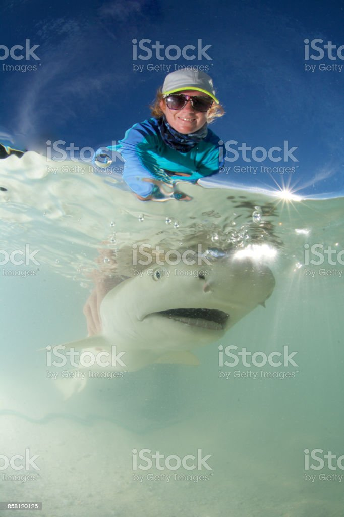 marine biologist releases shark stock photo