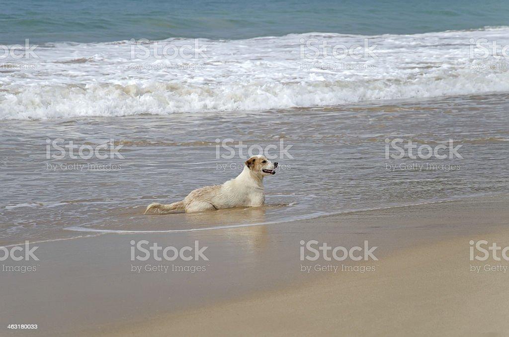 Marine dog stock photo